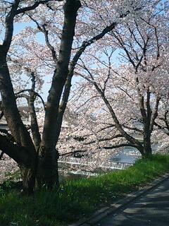 高野川の、