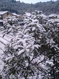 積   雪